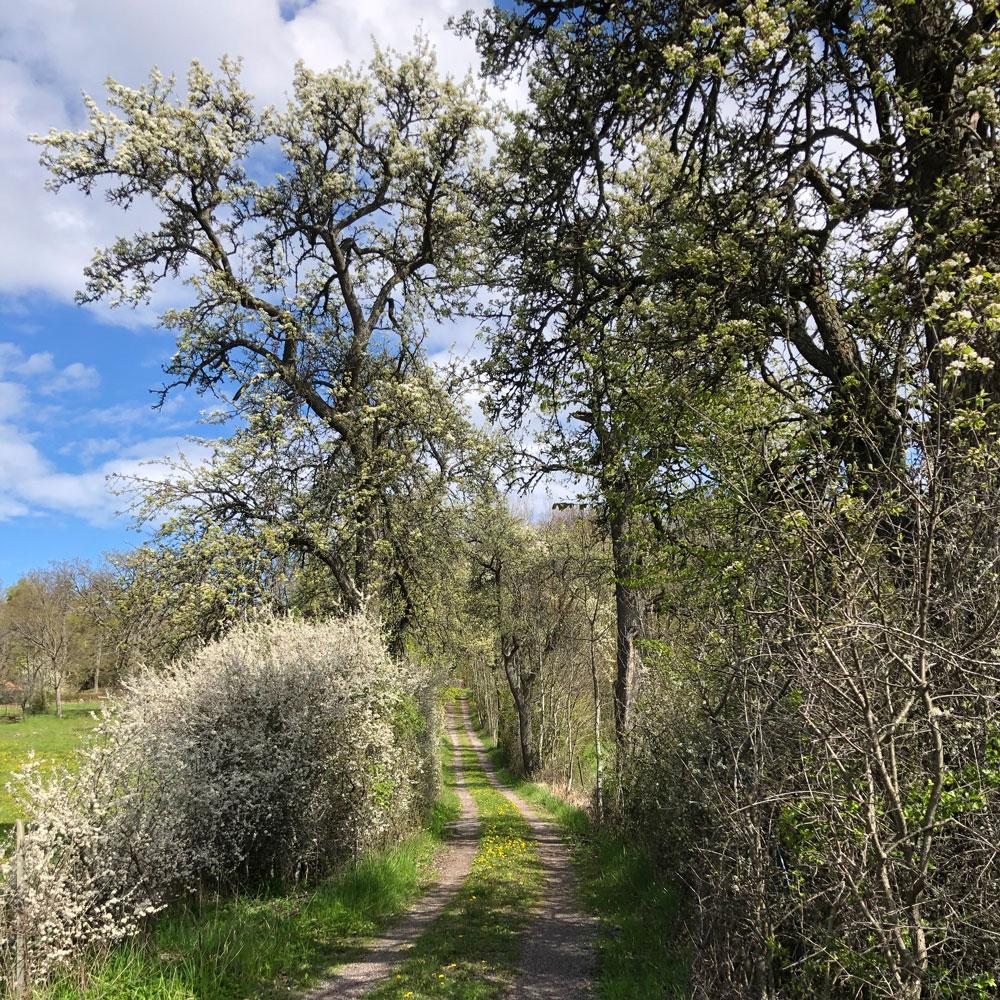 Hiking Eldgarnsö